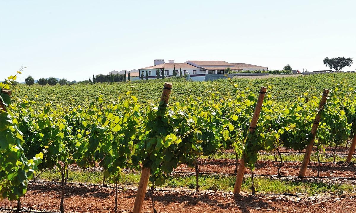 Medieval Tastings Wine Tours Portugal